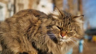 Homeless cat on the street. Close-up portrait cat. Cute cat face.