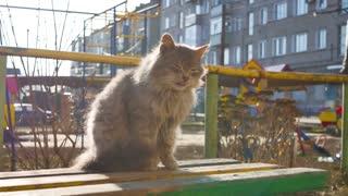 Homeless cat on the street.