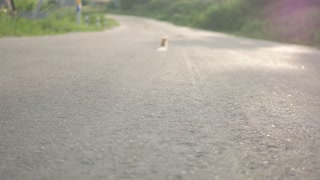 Little red stray dirty kitten on road side,alone in the world concept,selective focus.