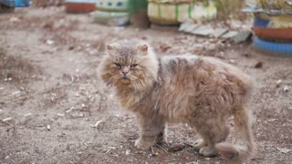 Old homeless cat on the street. Close-up portrait cat. Cute cat face.