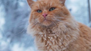 Old homeless red cat on the street. Close-up portrait cute American short hair cat. Cute cat face.
