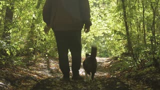 Old man walking in the woods with his dog, a sunny spring day. Beautiful rays of the sun.