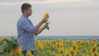 Rancher man in sunflower field. Satisfied farmer in a sunflowers field looking at sunflower seeds.