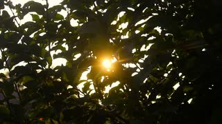 Rays of the summer sun shining through the green foliage of the trees. Morning sun shines through fresh leaves.