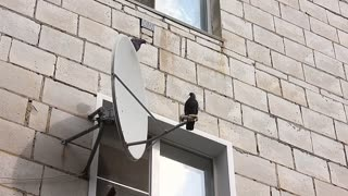Satellite dish mounted on a brick wall. Many satellite dishes on side of apartment building.