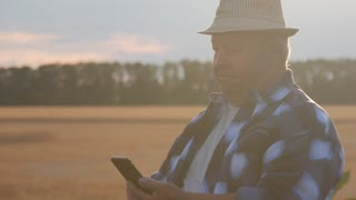 Senior farmer inspecting quality of corn and working with a smartphone.