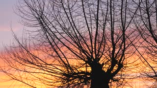 Silhouette of a tree with the sunset