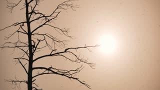 Silhouette tree of sunrise