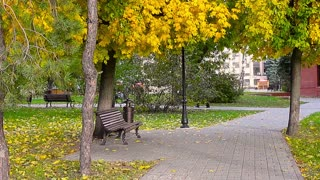 Stylish bench in autumn park. Wooden bench in the city park.