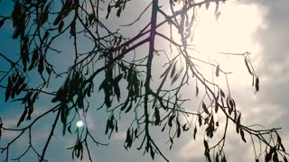 Sun Through Tree Branches at Sunset