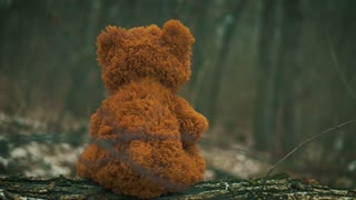 Teddy bear in the forest, loneliness.