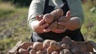 The farmer holding potatoes. Healthy food with vitamins. Fresh and organic food. Concept of vegetarians, organic and natural product.