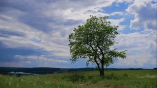Timelapse green tree and cloudy sky. Slider movement.