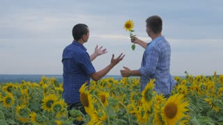 Two friend farmer rancher ,funny around situation on the sunflower field. Partner farmers men analyzing sunflower field collaboration and talking about harvest.