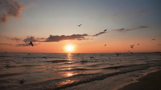 Waves at sea at sunset. Flocks of seagulls fly over water. Sunlight reflect on water surface.