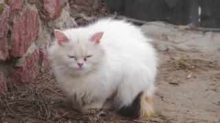 White homeless cat sitting on the street