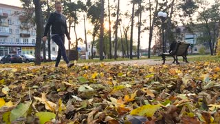 Woman walk and kick up yellow leaves by shoe tip, elegant slim legs in black shoes. Lady stroll at park in golden autumn time, play with leaf litter at lawn, throw up dry crunchy colourful leafage.