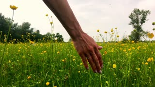 Woman's Hand Caressing Grass Summer Concept Slow Motion Background.
