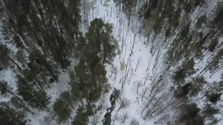 Aerial view on winter bog in the middle of snowy forest. Bird eye view on winter landscape