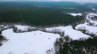 AERIAL: winter forest and river. Birds eye view on winter landscape of snowy forest and ribbon-like river