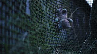 An old fence, overgrown with moss and an abandoned children's toy. Blurred shot