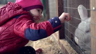 Child feeds white rabbit grass
