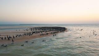 Aerial view. Ducks takeoff. Ducks ashore. Migration of ducks