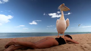 Interaction of a girl with animals and birds on the beach with blue water