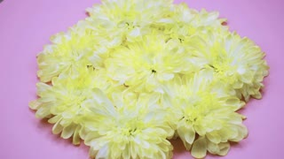ROTATION: A flowers are rotating on a pink background. Top view