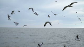 Seagull flying slow motion