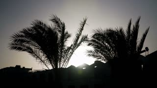 Tropical palm trees sway in wind at sunset