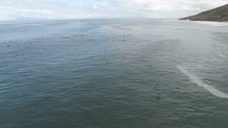 Aerial Flying With Sea Birds over the Ocean