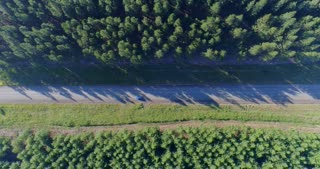 Aerial of Car Driving Between incredible Forests
