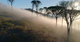 Flying Through Misty Trees in Sunrise Light on Signal Hill