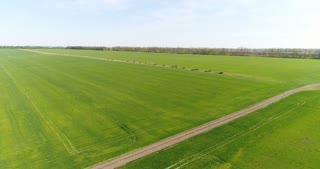Aerial flight over green field Aerial flight over green field