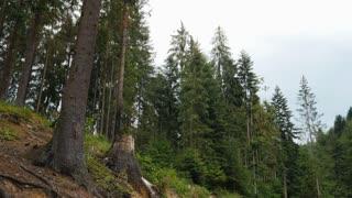 Bearded hiker taking break on tree stump