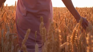 Beauty woman walking through yellow wheat field