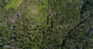 Flying over forest with track in summer