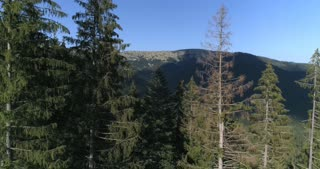 Mountain landscape with trees in Carpathians