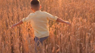 Small boy running through the wheat field in slow motion