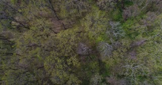 Trees becoming green in early spring, aerial shot