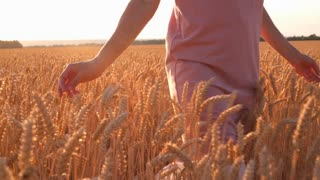 Woman hands touching wheat ears in field