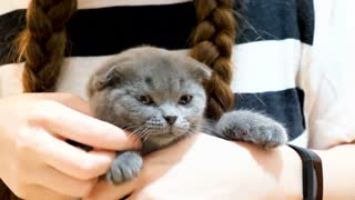 Adorable scottish fold kitten breed in her owner arms. Animal lovers