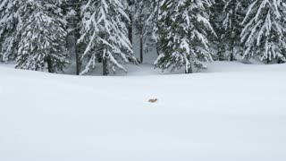 Dog is running in snow in winter mountains. Travel