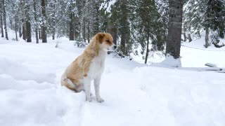 Dog playing in snow in winter. Funny animal