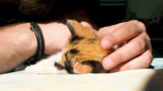 Funny video. Little kitten is grabbing and biting a bearded man nose. Animal fun and love