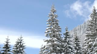Gorgeous lanscape of pine tree in mountains covered with snow
