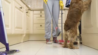A dog prevents a housewife to clean the floor in the kitchen