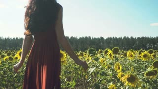 Attractive woman in long dress walks among the sunflowers
