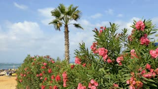 Beautiful bush with flowers and palm against sea background